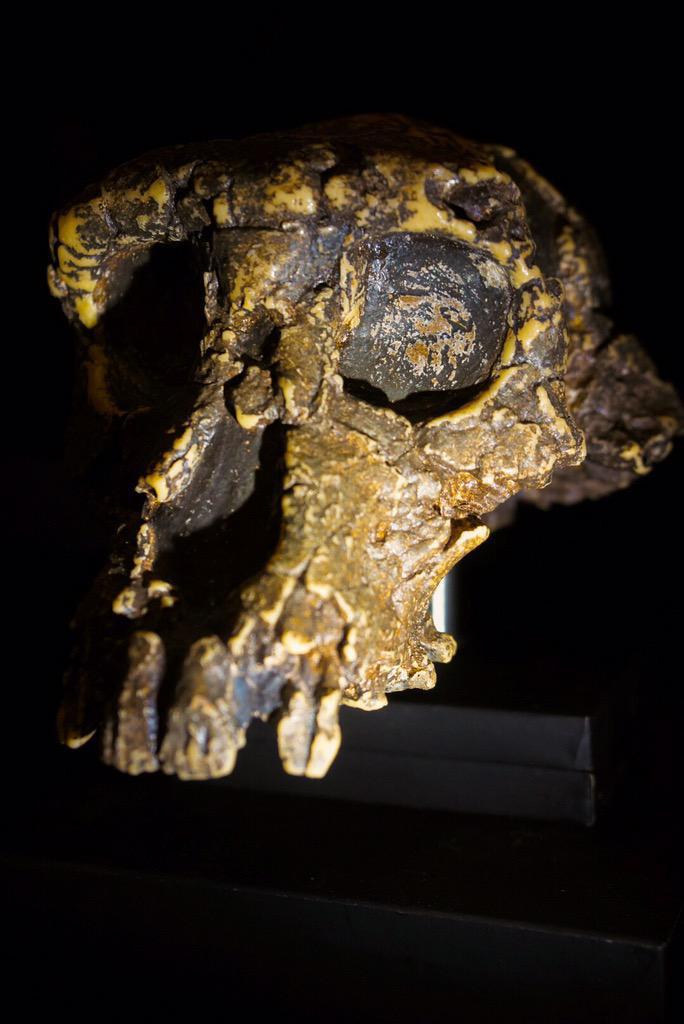 Hideo-Kojima-Sahelanthropus-Skull