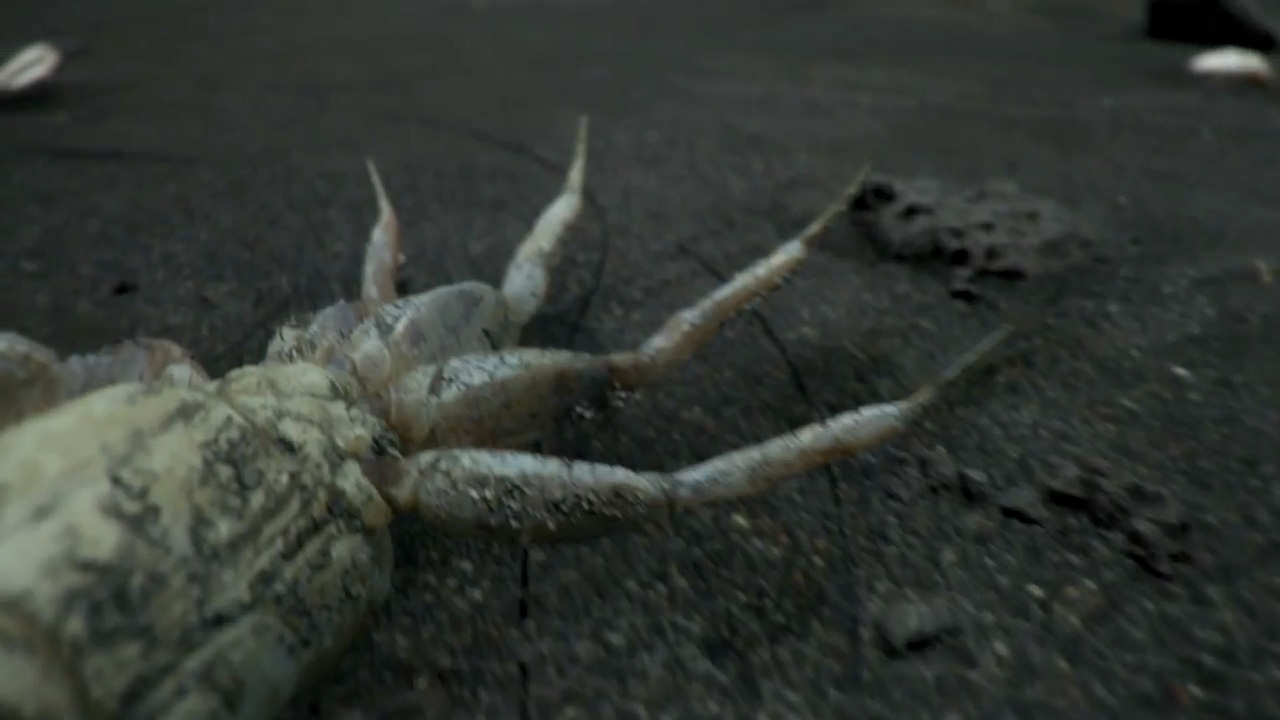 Death-Stranding-Trailer-Crab-Hand-Palm